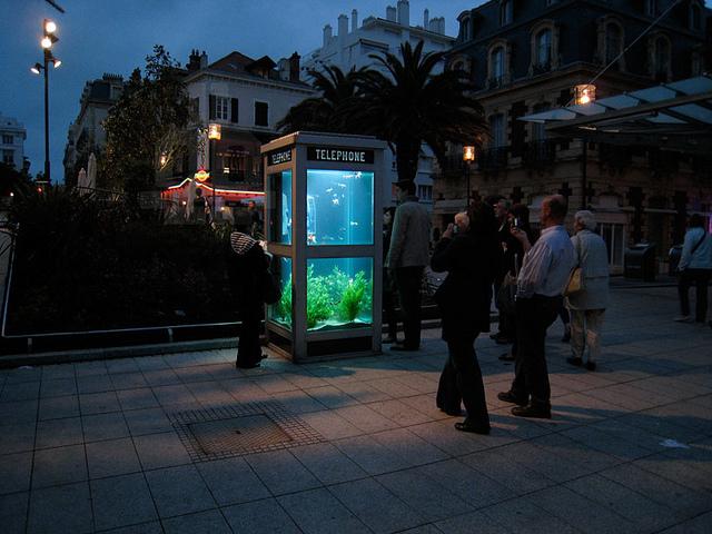 cabine telephonique recyclee aquarium Une cabine téléphonique recyclée en aquarium