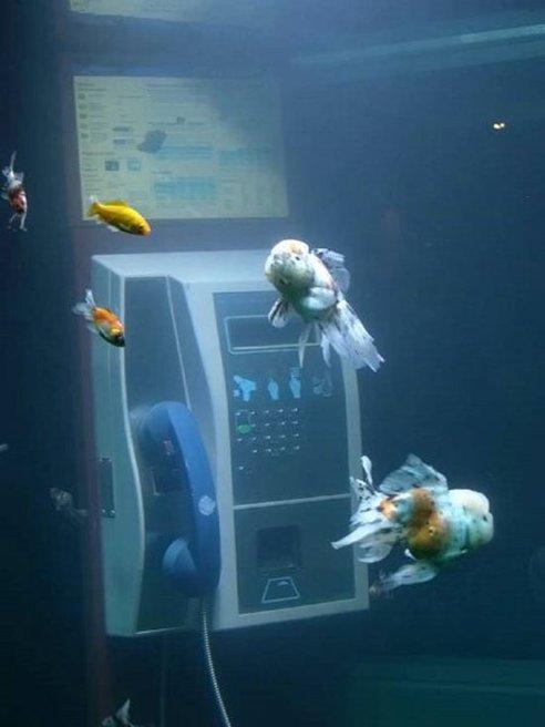 cabine telephonique recyclee aquarium detail Une cabine téléphonique recyclée en aquarium