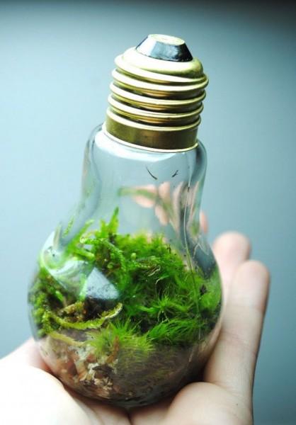 bulb-moss__880